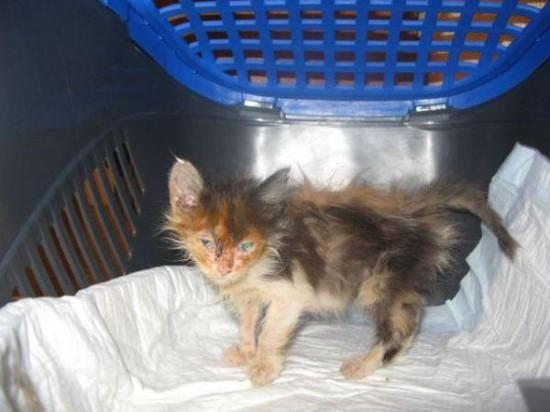 3 550x412 Спасённые кошки