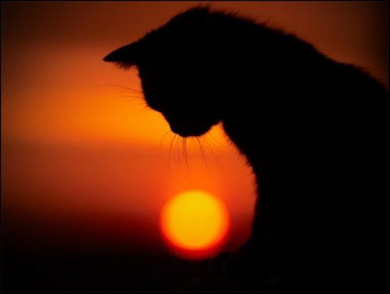 30 550x415 Молитва и кот