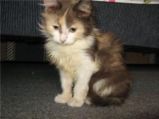 4 550x412 Спасённые кошки