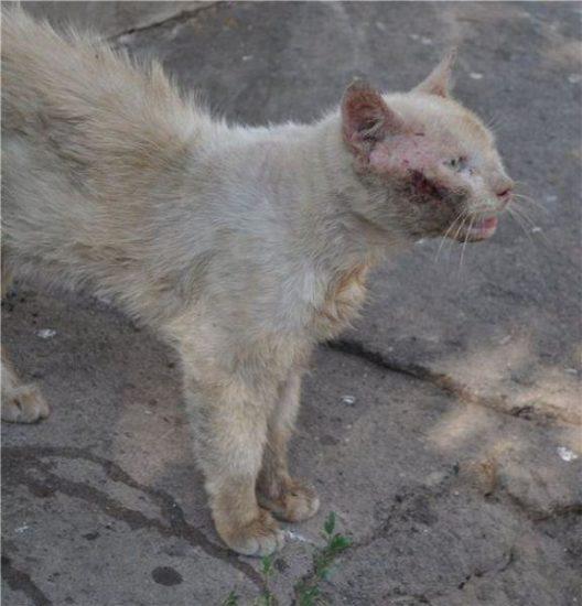 5 528x550 Спасённые кошки