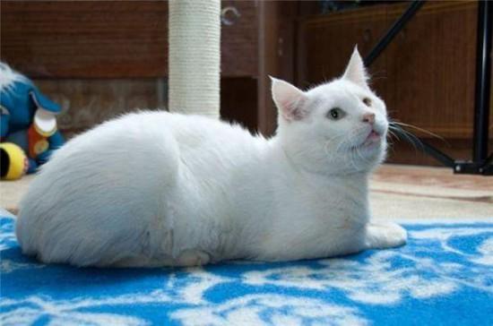 6 550x364 Спасённые кошки
