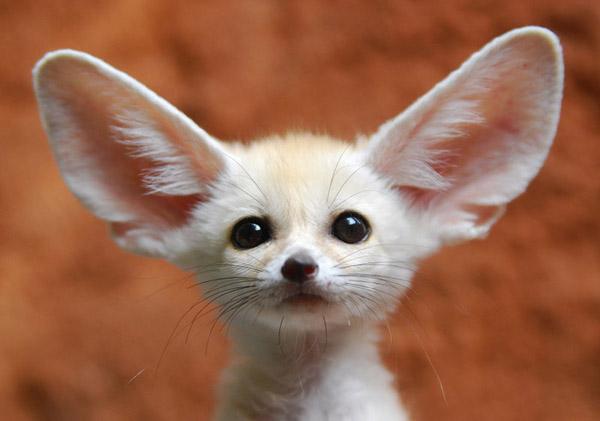 недомогания обычно фото с надписью самые редкие виды животных случае, если лобовой