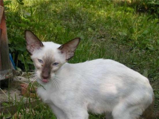 9 550x412 Спасённые кошки