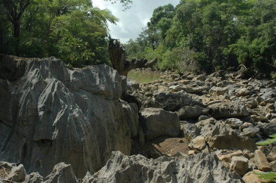 DSC 4057 550x365 Мадагаскар, заповедник Цинжи дю Бемараха