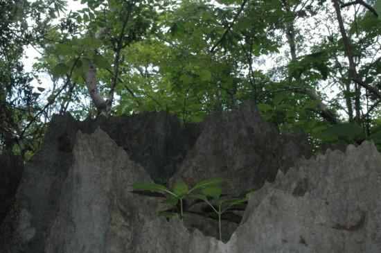 DSC 4188 550x365 Мадагаскар, заповедник Цинжи дю Бемараха
