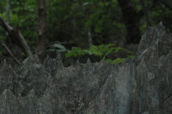 DSC 4189 550x365 Мадагаскар, заповедник Цинжи дю Бемараха