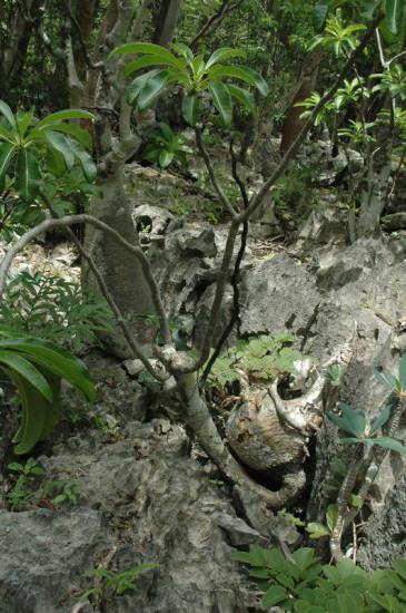 DSC 4223 365x550 Мадагаскар, заповедник Цинжи дю Бемараха