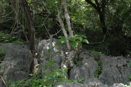 DSC 4229 550x365 Мадагаскар, заповедник Цинжи дю Бемараха