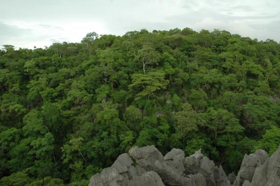 DSC 4350 550x365 Мадагаскар, заповедник Цинжи дю Бемараха