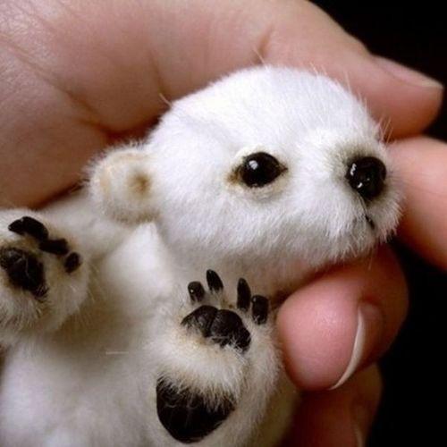 bebes animaux trop mignons 1014133 large ВСЕ В НАШИХ РУКАХ!!!