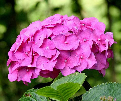 gortroze Цветочный гороскоп