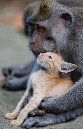 kat makaka2 356x550 Кошачья мама
