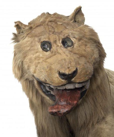 original3 458x550 Почти узнаваемый лев