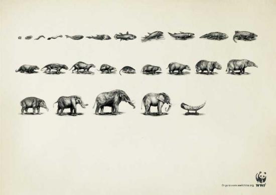 wwf 25 1 Плакаты от WWF   природа нуждается в рекламе