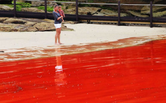 17406bc2 550x343 Тихий океан у побережья Австралии стал красным