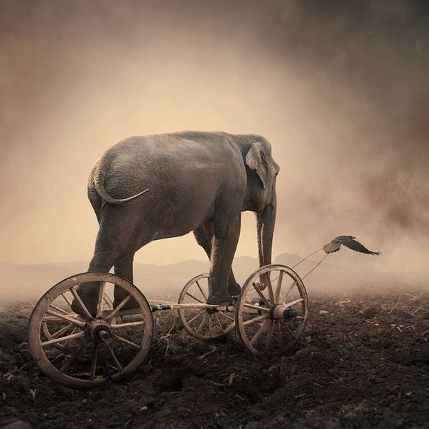 19 Притча о слепых мудрецах и слоне