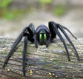 275px Spider cutted Зороастрийский гороскоп. Паук