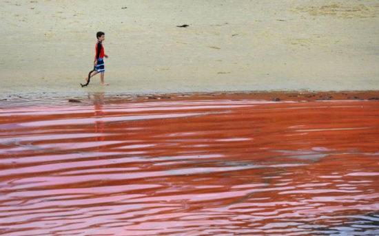 2f927dd3 550x343 Тихий океан у побережья Австралии стал красным