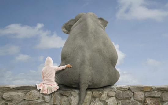 35e28cf4 550x344 Туристы должны помнить о защите прав животных