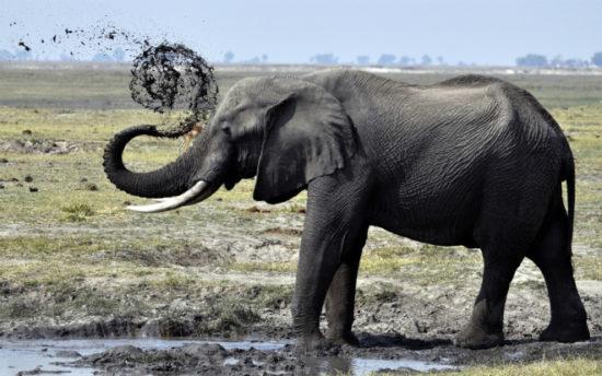 83232edb 550x344 Туристы должны помнить о защите прав животных