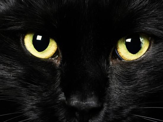 Pochemu murlikayut koshki 550x412 Интересности о кошках