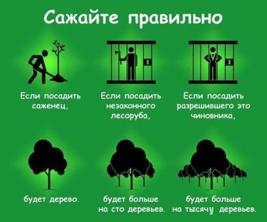 QDSyTAfk86U 550x457 Экология в картинках