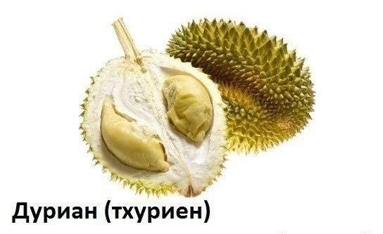 WOtbbq1g3vY Экзотические фрукты