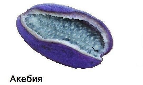 Zn cJb5xqx8 Экзотические фрукты