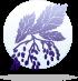 elder Гороскоп Друидов (деревья)