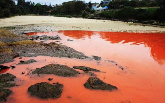 f49f3141 550x343 Тихий океан у побережья Австралии стал красным
