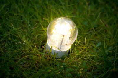 s06754059 Голландские ученые получают энергию из травы