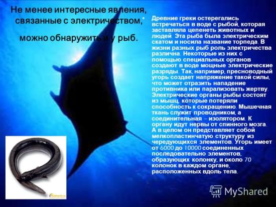 slide 5 550x412 Электричество в жизни животных и растений