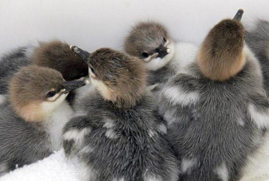 zoo babies in 2011 5 550x371 Дети, они и... у всех дети