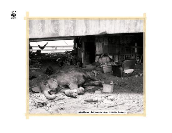 13 0 Плакаты от WWF против вырубки лесов