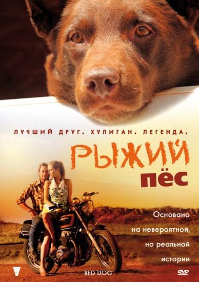 263546 388x550 Рыжий пёс