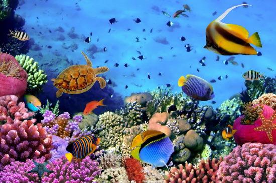 Egipet foto sajt 1 Hurgada 550x365 Египет