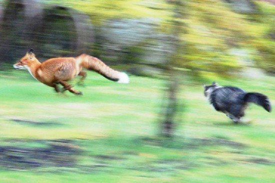 Fun Telegraph 21 550x367 Запечатленное взаимодействие. Природа