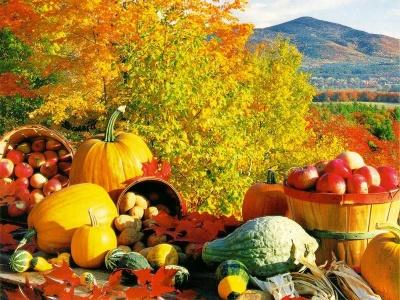 fall harvest Самые полезные продукты времени сбора урожая