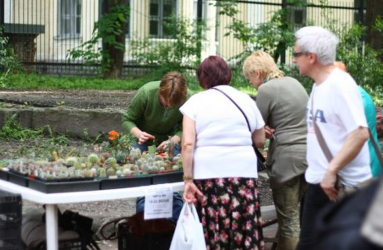 fff 2 550x359 Киевские выставки растений