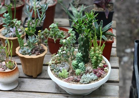 fff 550x388 Киевские выставки растений