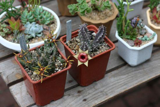 fif 550x368 Киевские выставки растений