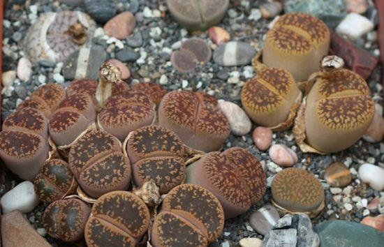file 550x354 Киевские выставки растений