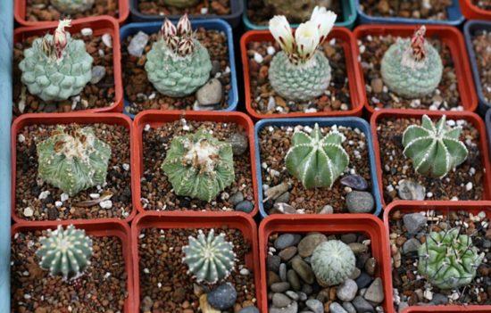 ile 550x351 Киевские выставки растений