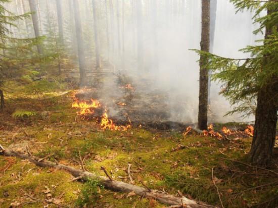 image90747 550x412 Пожароопасность