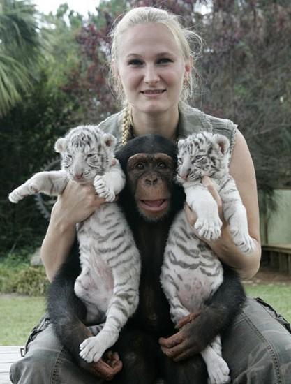 monkey7 417x550 Материнская любовь