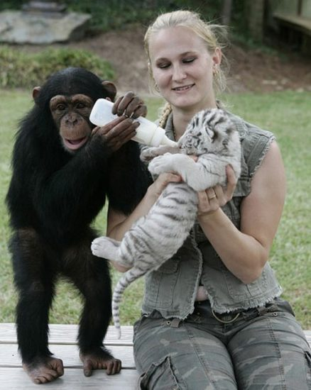 monkey8 438x550 Материнская любовь