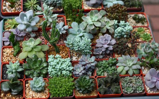 ss 550x342 Киевские выставки растений