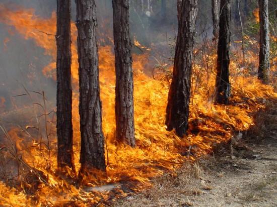 wildfire200 550x412 Пожароопасность