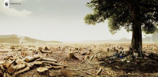 wwf 30 550x270 Природа и WWF