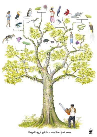 02 0 388x550 WWF против вырубки лесов